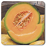 Cantaloupes, Muskmelons, and Watermelons