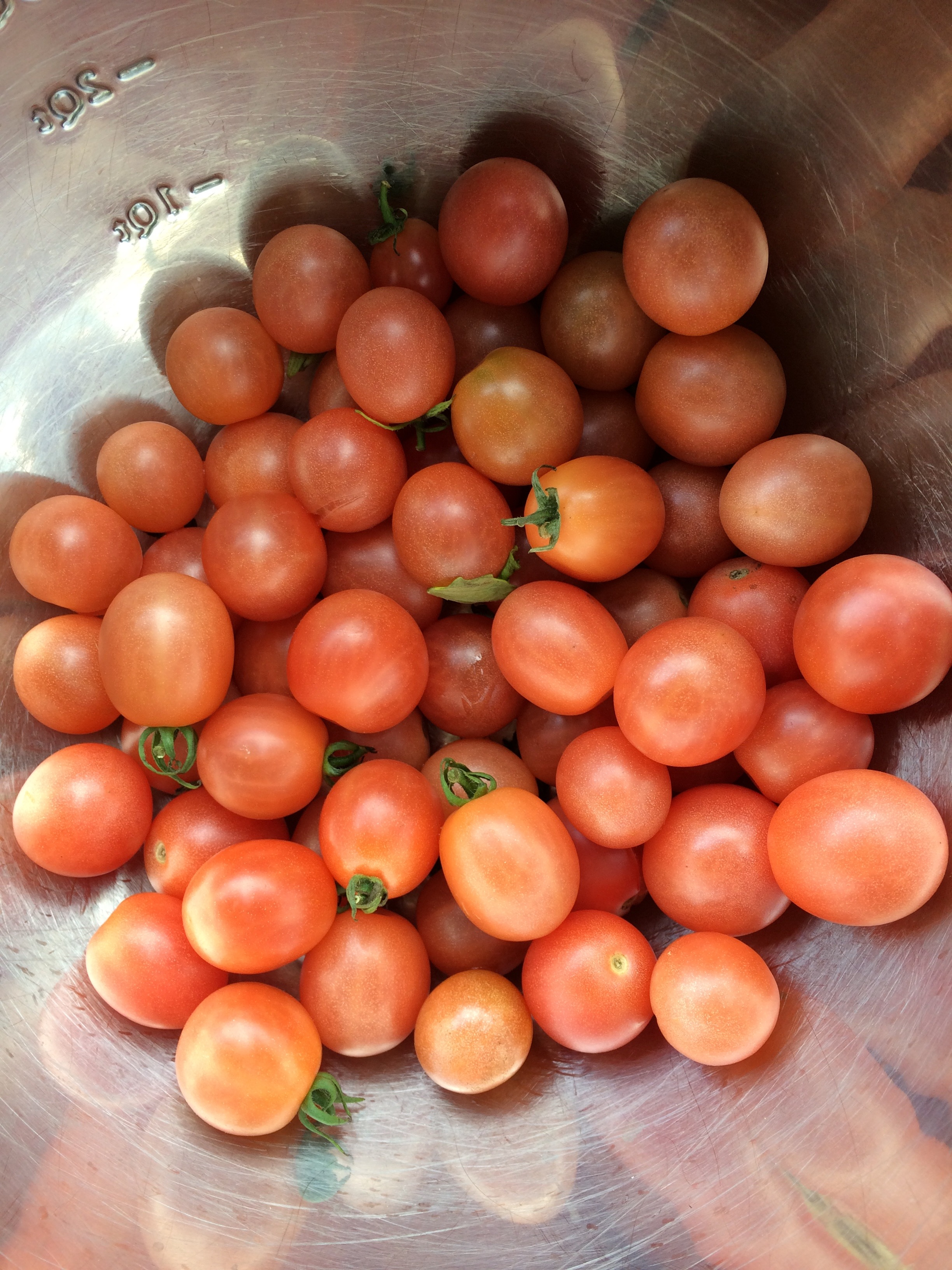 Gorgeous tomato Pink honey. Characteristics and description of the variety 1